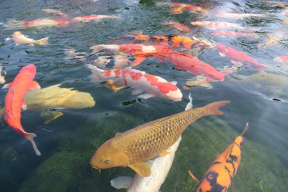 Рассматриваем бизнес на рыбе – что нужно для этого вида заработка, преимущества и недостатки, доходность рыбного бизнеса